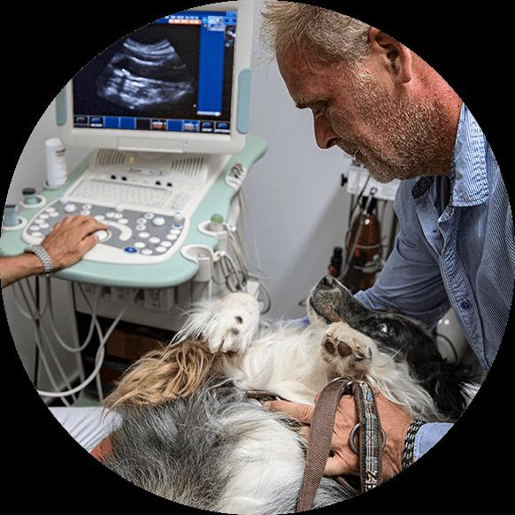 Tierärztliche Gemeinschaftspraxis Dr. Hülsmann & Dr. Unland